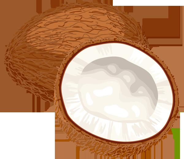 coconut clipart Coconut